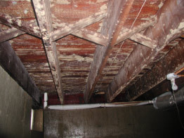 mold on subfloor